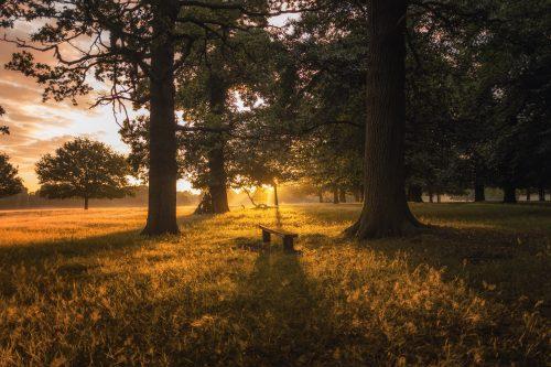 Een momentje in het bos voor jezelf