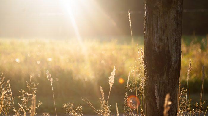 Pure zonnestralen daglicht