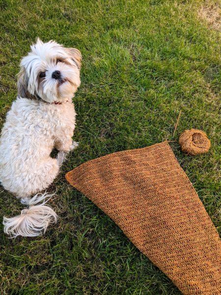 Hond met gehaakte sjaal